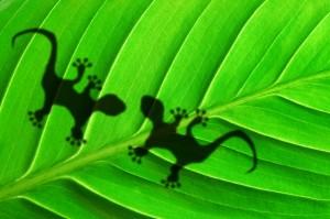 Inchiostro Gecko di hubergroup