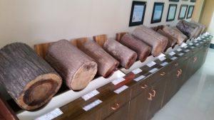 Essenze del legno coltivato nelle piantagioni di Asia Pulp & Paper all'ingresso dello stabilimento Indah Kiat