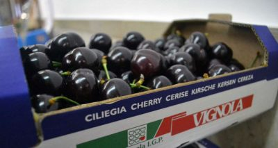 Cherries packaging in HP corrugated_InterTech