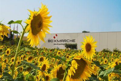 Box Marche sostenibilità