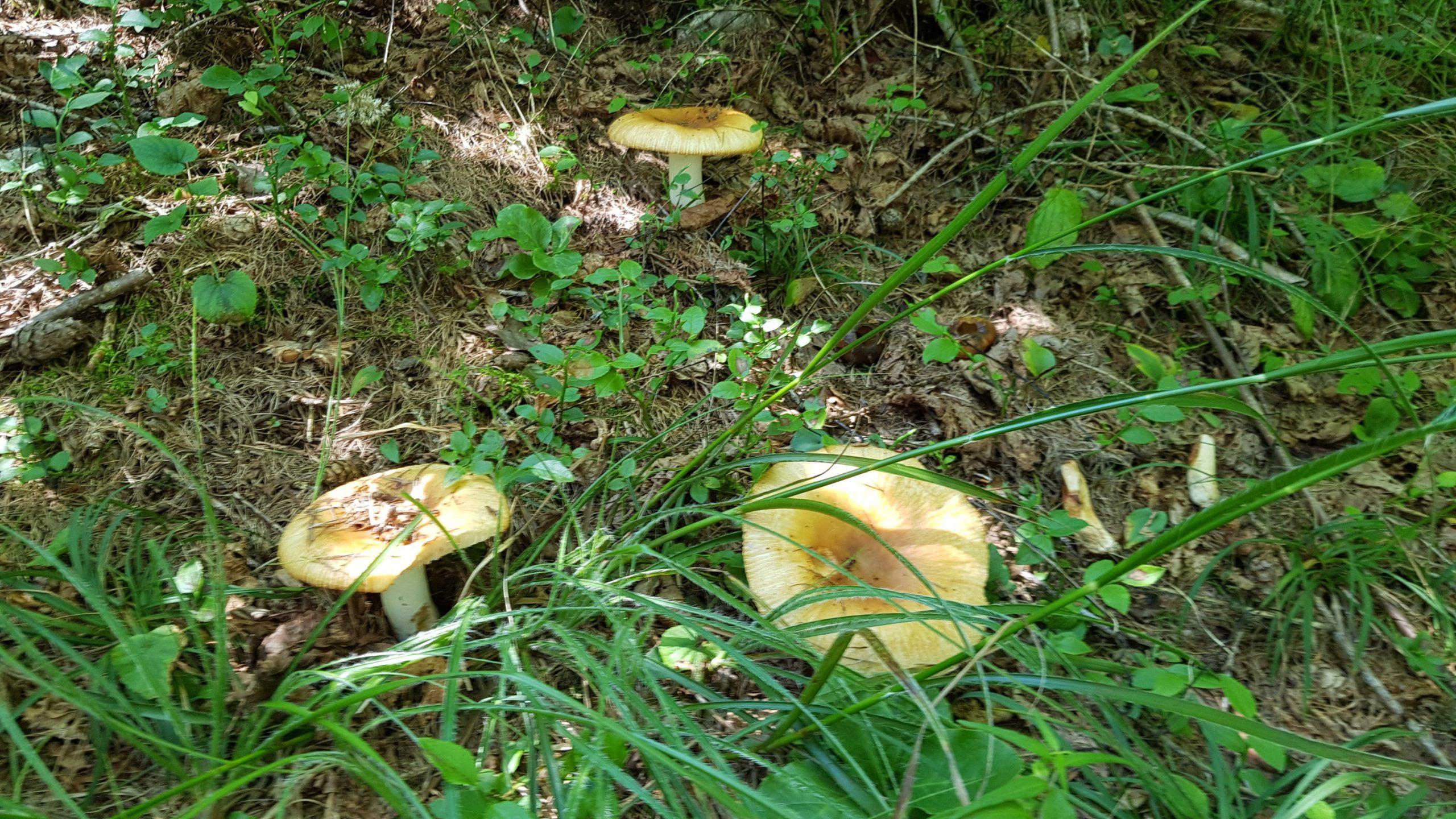 Plastica dai funghi si apre un nuovo business
